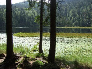bavarian-forest-270862_640